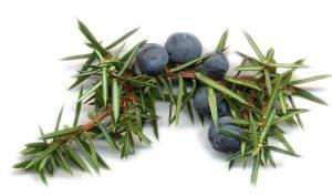 ginepro sainisrl spezie aromi